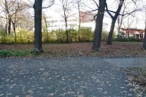 Die Bäume haben ihre Blätter schon abgeworfen, aber die Sträucher schirmen noch gegen die Strom- und turmstraße ab