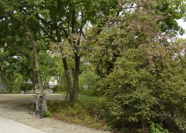 In den Schatten des zweistämmigen Ahornbaumes wurde ein Zierapfelbäumchen gepflanzt
